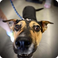 Adopt A Pet :: Cookie - ROSENBERG, TX
