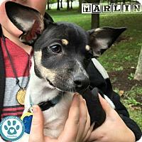 Adopt A Pet :: Marlin - Kimberton, PA