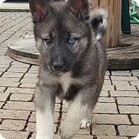 Adopt A Pet :: Thaddeus - Mechanicsburg, PA