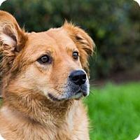 Adopt A Pet :: Maynard - San Diego, CA