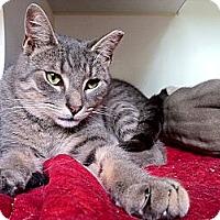 Adopt A Pet :: Humphrey - Brooklyn, NY