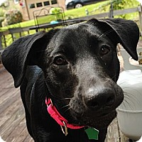 Adopt A Pet :: Kelly NEEDS FOSTER-photolink - Richmond, VA