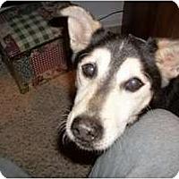 Adopt A Pet :: Thomas - Seymour, CT