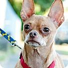 Adopt A Pet :: Patrone