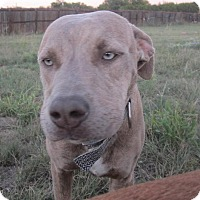 Adopt A Pet :: Micah - Copperas Cove, TX