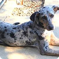 Adopt A Pet :: *Joanie - PENDING - Westport, CT