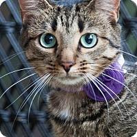 Adopt A Pet :: Heidi - Waxhaw, NC