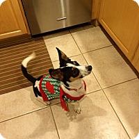 Adopt A Pet :: Jack - Pflugerville, TX