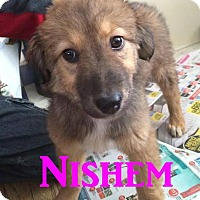 Adopt A Pet :: Nishem - Adopted Feb 2015 - Huntsville, ON