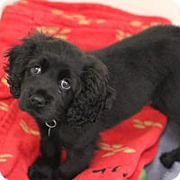 Adopt A Pet :: SweetPea - Smyrna, GA