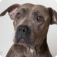Adopt A Pet :: *JACKIE - Sacramento, CA