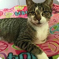Adopt A Pet :: BELLA - Rochester Hills, MI