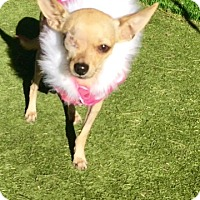 Adopt A Pet :: Peggy - Henderson, NV