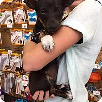 Adopt A Pet :: Kalanie - Homestead, FL