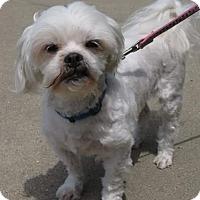 Adopt A Pet :: Oliver - Inver Grove, MN