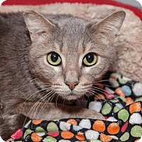 Adopt A Pet :: Stanley - Mission Hills, CA