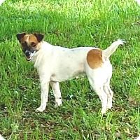 Adopt A Pet :: ALEX-adoption pending - Terra Ceia, FL