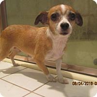 Adopt A Pet :: SUZIE - La Mesa, CA