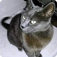 Adopt A Pet :: Missy - Castro Valley, CA