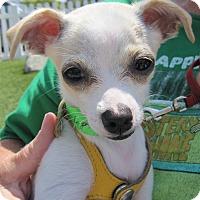 Adopt A Pet :: Logan - San Diego, CA