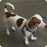 Adopt A Pet :: Skyler - San Diego, CA