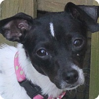 Adopt A Pet :: Clover - North Olmsted, OH