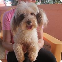 Adopt A Pet :: Noodles - Westport, CT