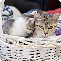 Adopt A Pet :: Juno - Chattanooga, TN