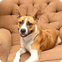 Adopt A Pet :: Lacey - Maybrook, NY