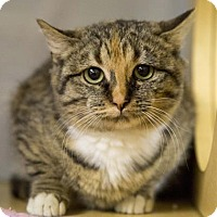 Adopt A Pet :: Chrissie - Kettering, OH