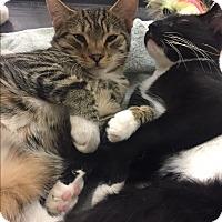 Adopt A Pet :: Andrew - Lancaster, CA