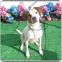 Adopt A Pet :: MANDY - Marietta, GA