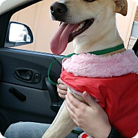 Adopt A Pet :: Alana - Beverly Hills, CA