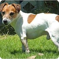 Adopt A Pet :: DIGGER - Phoenix, AZ