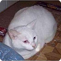 Adopt A Pet :: Phoebe - Summerville, SC