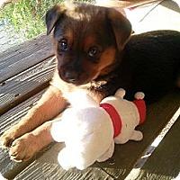 Adopt A Pet :: Osa - Vista, CA