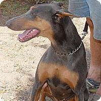 Adopt A Pet :: Sunny - Sun Valley, CA
