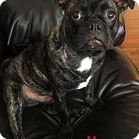 Adopt A Pet :: Monty - Cary, IL