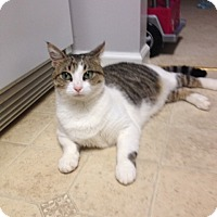 Adopt A Pet :: Carl - Monroe, GA
