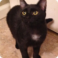 Adopt A Pet :: Ebony - Horsham, PA