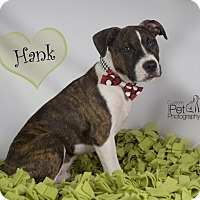 Adopt A Pet :: Hank - San Diego, CA
