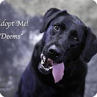 Adopt A Pet :: Deems - Acton, CA