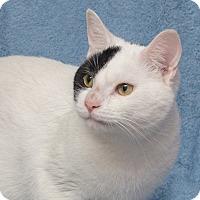 Adopt A Pet :: Squiggy - Elmwood Park, NJ