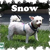 Adopt A Pet :: Snow - Fallston, MD