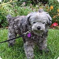 Adopt A Pet :: GERTRUDE - Newport Beach, CA