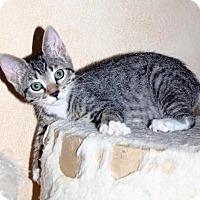 Adopt A Pet :: Lena Faye - Upland, CA