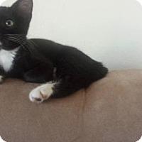 Adopt A Pet :: HEPBURN - Westlake, CA