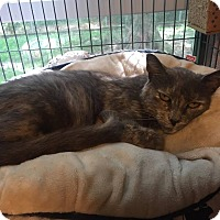 Adopt A Pet :: Rosemary - Hanna City, IL