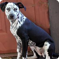 Adopt A Pet :: Ali - Dalton, GA