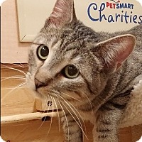 Adopt A Pet :: William-5 MONTHS - GENTLE - Naperville, IL